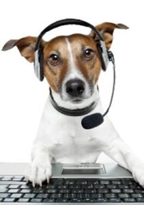 contact-dog