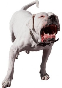 dog-bark