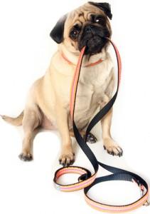 pug-leash-sml