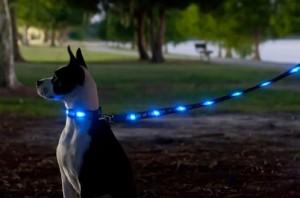 6-22-11 led collar and leash